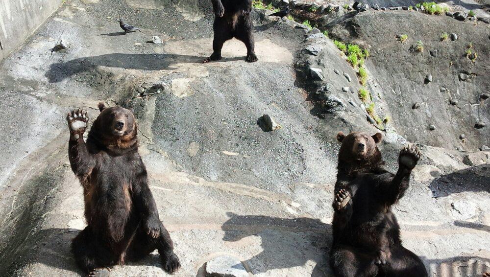【北海道】観光ならクマ牧場がおすすめお得情報と共に紹介します