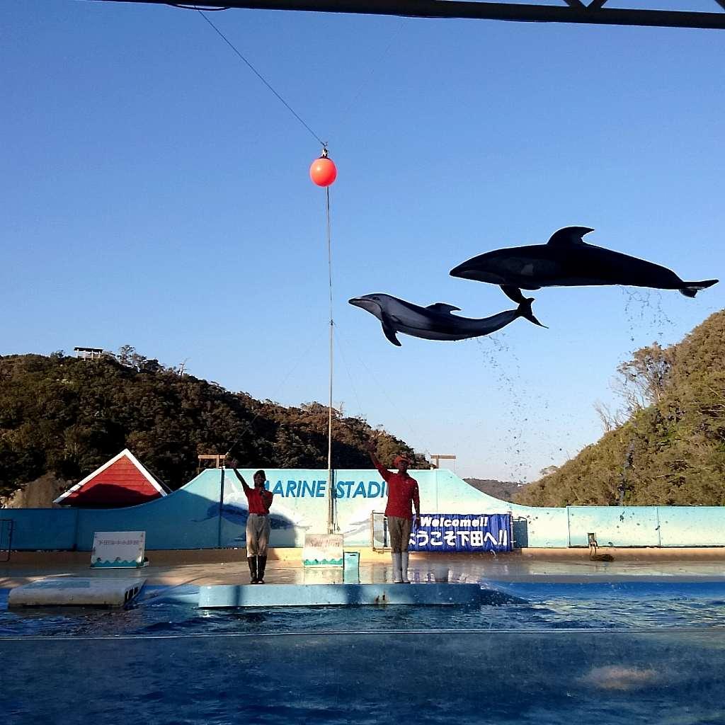 想像以上に楽しめる!!伊豆下田海中水族館の魅力を徹底紹介